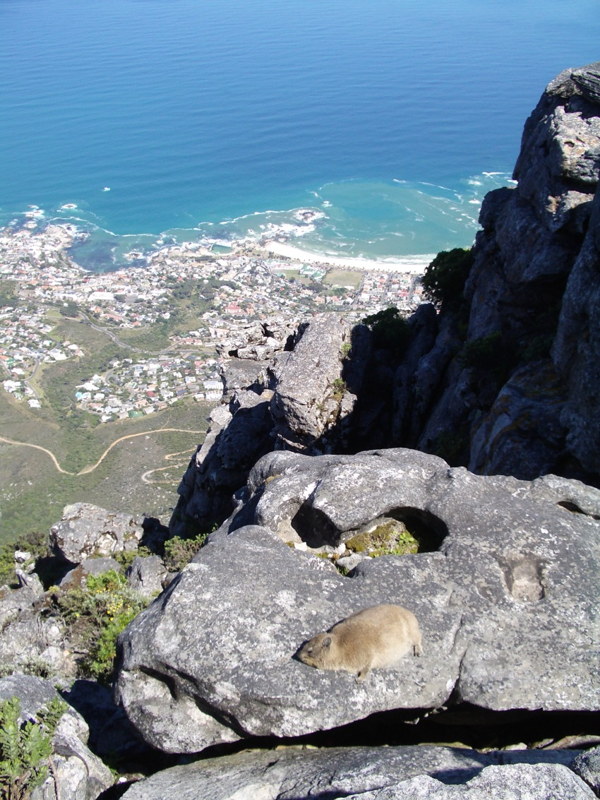Table Mountain, 2005 - Home for a Rock Hyrax