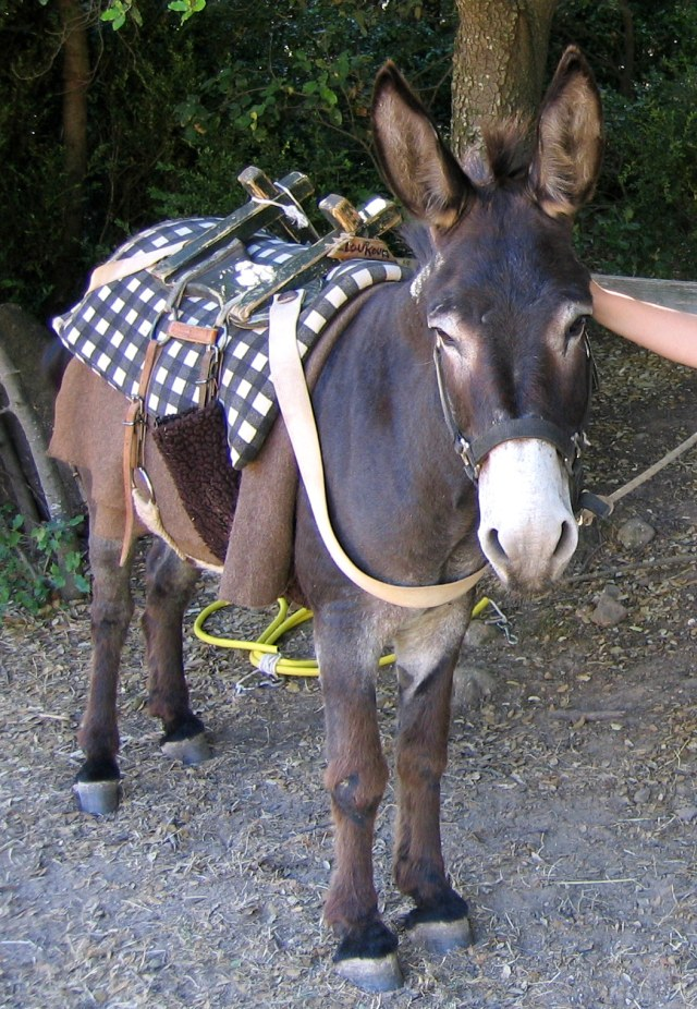 World Donkey Day