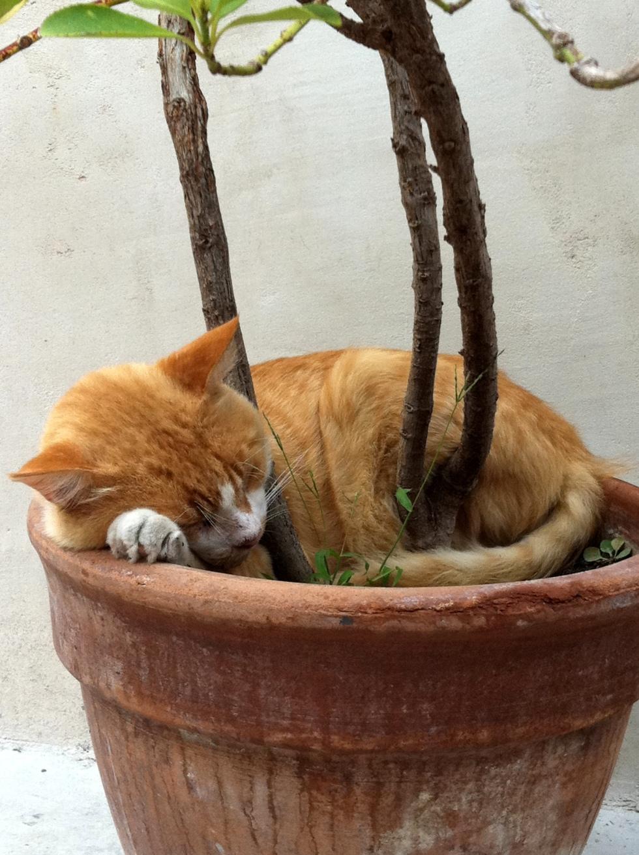 Sleeping cat, Dubrovnik, Dalmatia, Croatia