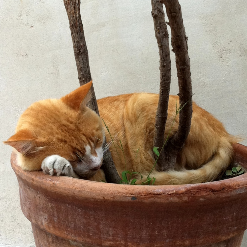 Sleeping cat, Dubrovnik, Dalmatia, Croatia