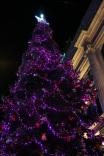 Tous Christmas tree illuminated