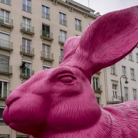 Pink Rabbit!