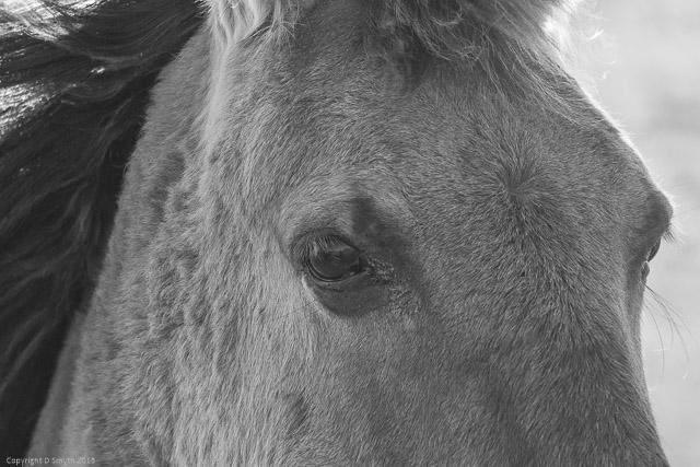 wild horses ds