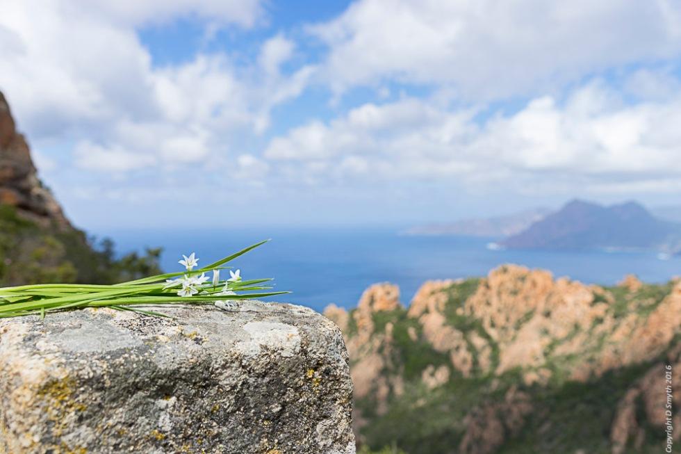 a1_20160501_20160501_Corsica_05502754_6000 x 4000-2