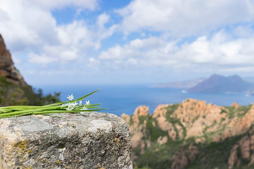 a1_20160501_20160501_Corsica_05502754_6000 x 4000.jpg