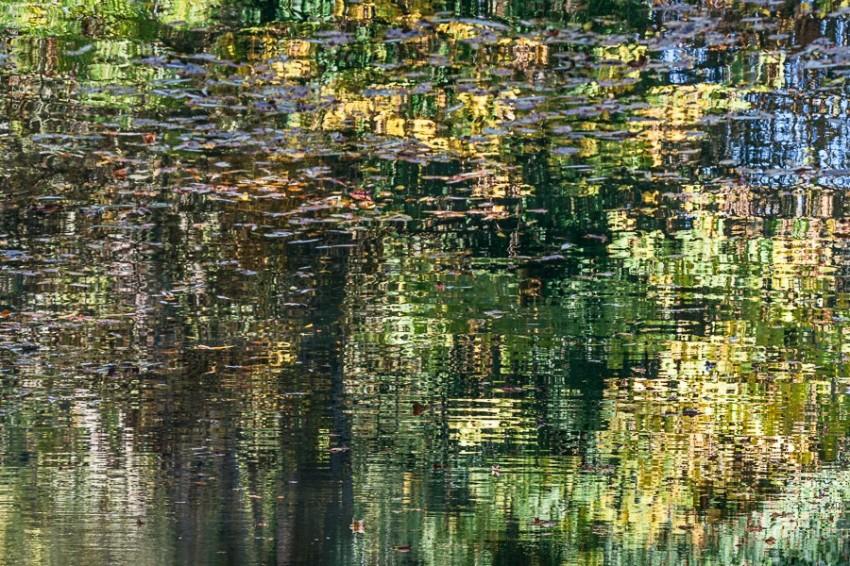debbie-smyth-autumnal-impressions