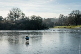 Frozen lake in Verulamium Park