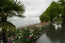 Lakeside promenade and puddles