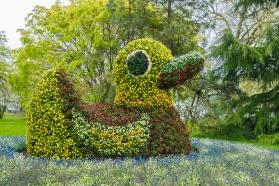 Flowery duck