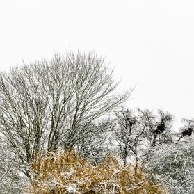Verulamium Park, St Albans, Hertfordshire, December 2017