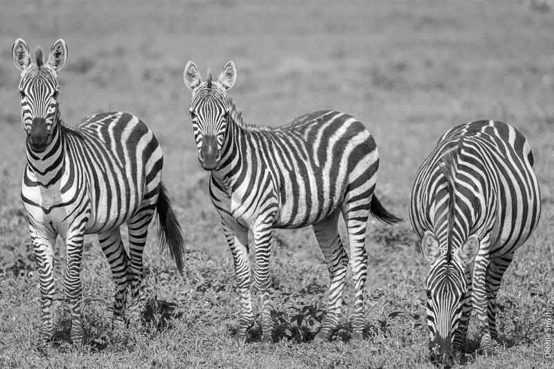 TanzaniaA9A0196920180128-1-2