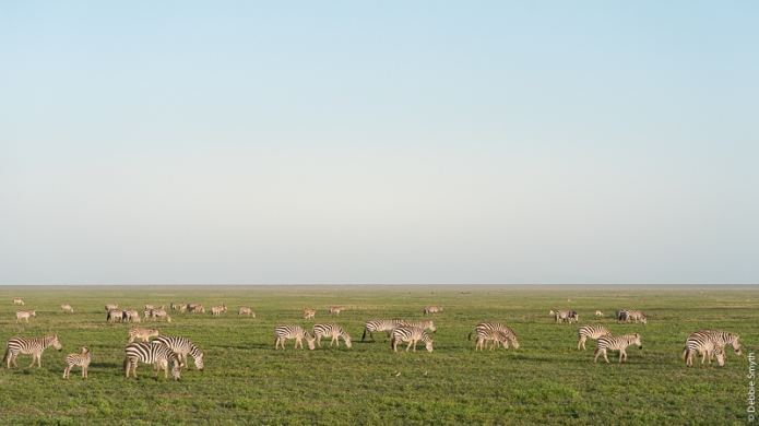 TanzaniaA9A0225820180129-1-2