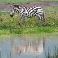 Stripy Reflections