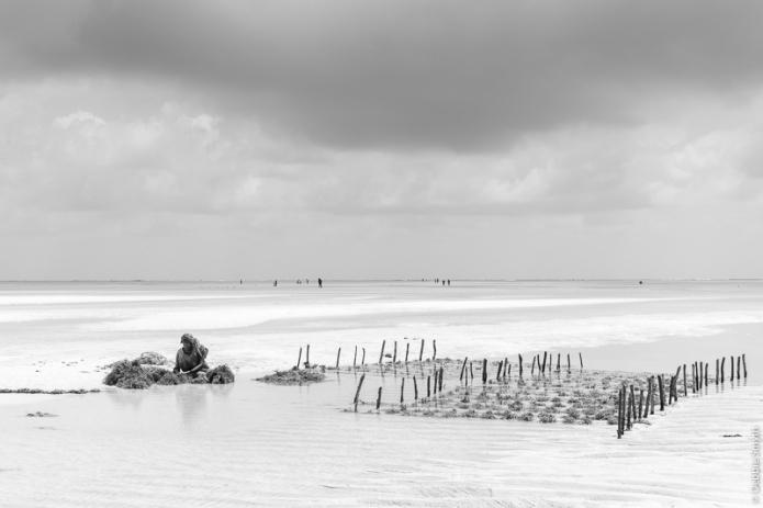ZanzibarA730142420170201-1