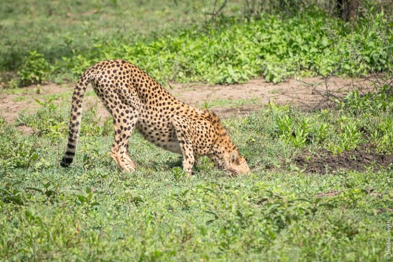 TanzaniaA730087820170127-1
