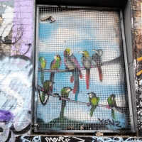 Caged birds in Hackney Wick