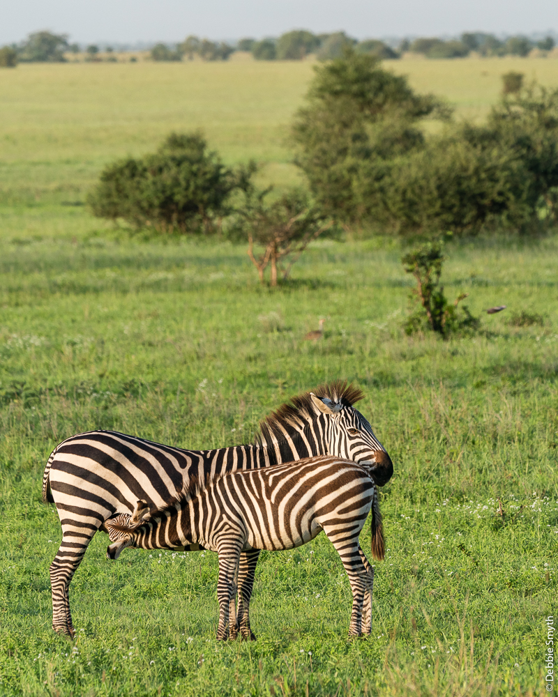 TanzaniaA9A0084420180123-1
