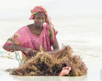 Seaweed farming, Zanzibar