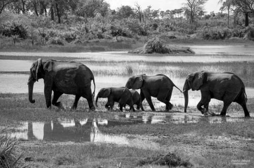 Nigeria, Botswana, June 2012