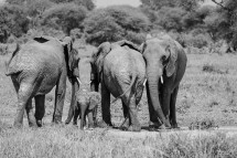 Tanzania, January 2018