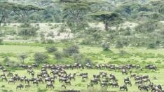 TanzaniaA730073220170127-1