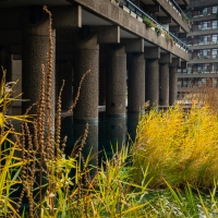 Autumn meets brutalism
