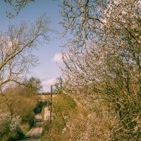Spring wanderings