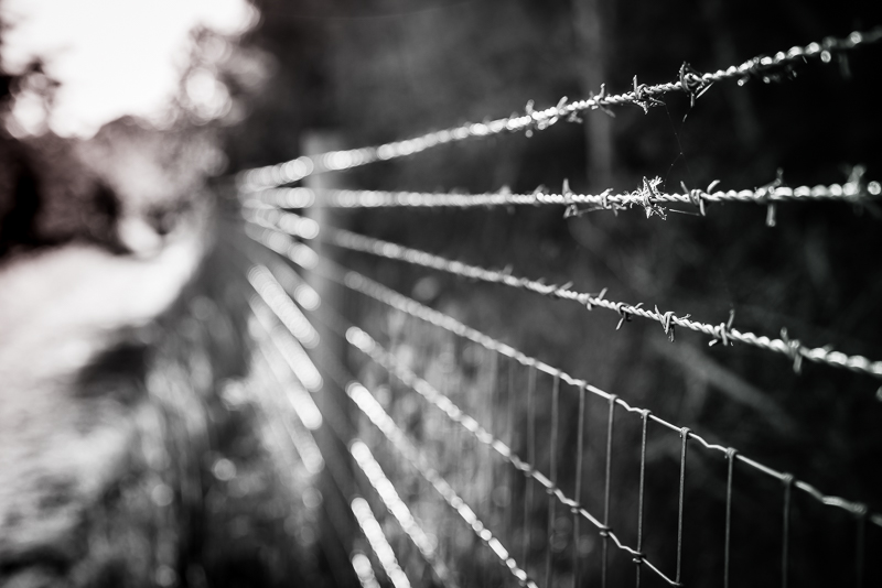 evening sunlight golden hour on barbed wire in lockdown with bokeh, Sony A73R
