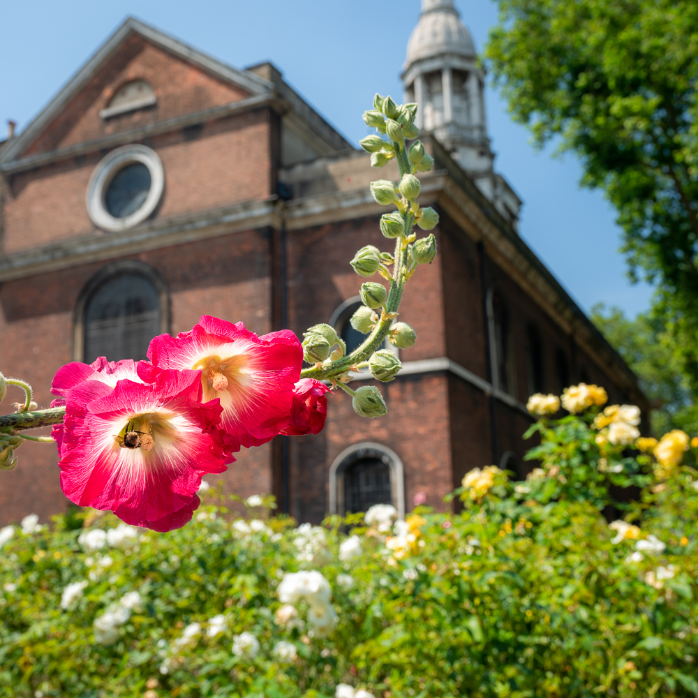 Shoreditch Church behind flowers