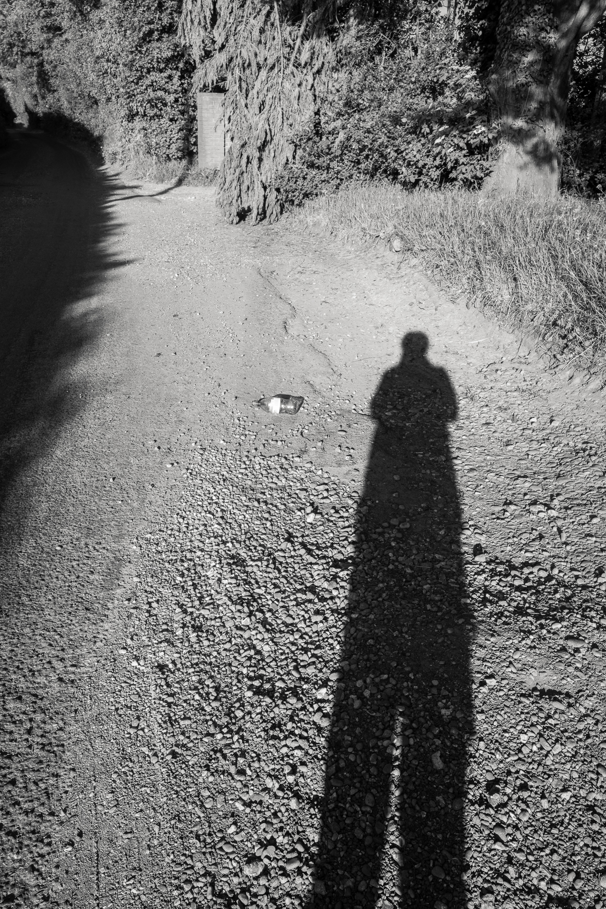 Long shadow in evening sun