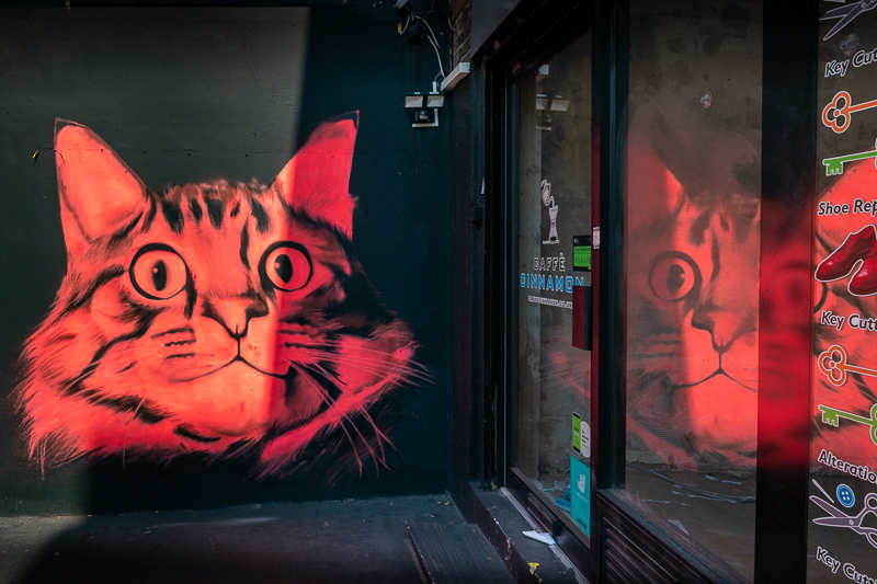 bright red cat
