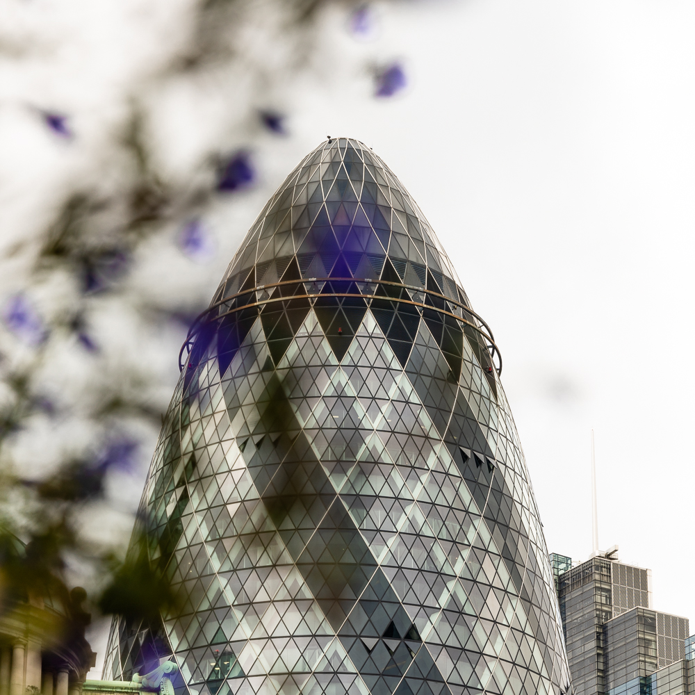 Purple flowers in front of The Gherkin