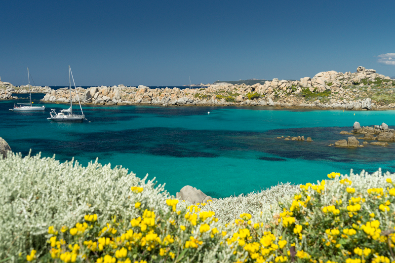 View to aquamarine sea with bright yellow flowers in foreground
