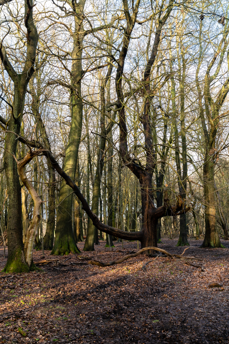 many trees in a wood with strong contrast of colours