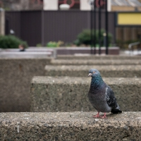 A Barbican resident takes a stroll