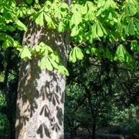 Leafy shade