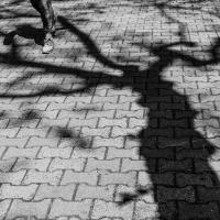 Where dark shadows lie