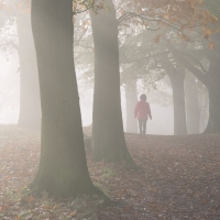 Walking the pathless woods
